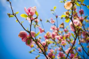 flowers in bud