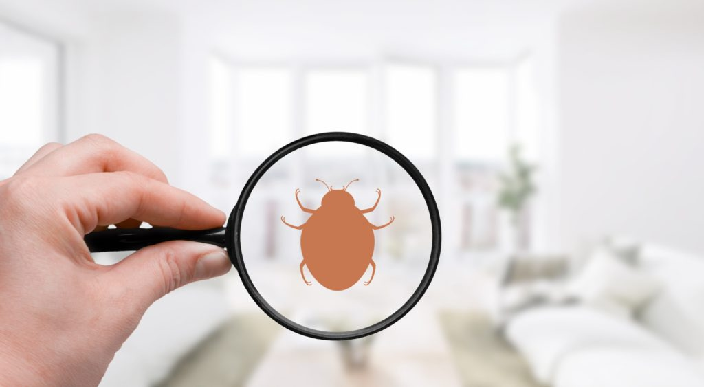 A hand holds a magnifying glass over an apartment. A bed bug is visible in the magnifying glass.