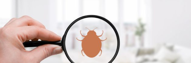 Bed bugs: identification and treatment