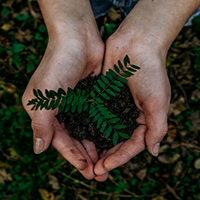 A close-up view of hands holding a seedling against a forest floor.