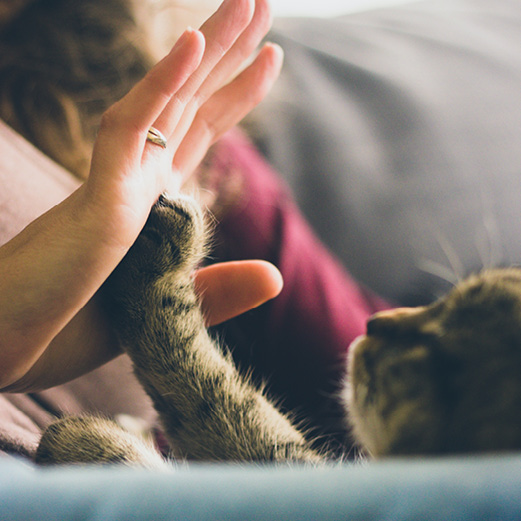 A woman's hand touching a cat's paw.